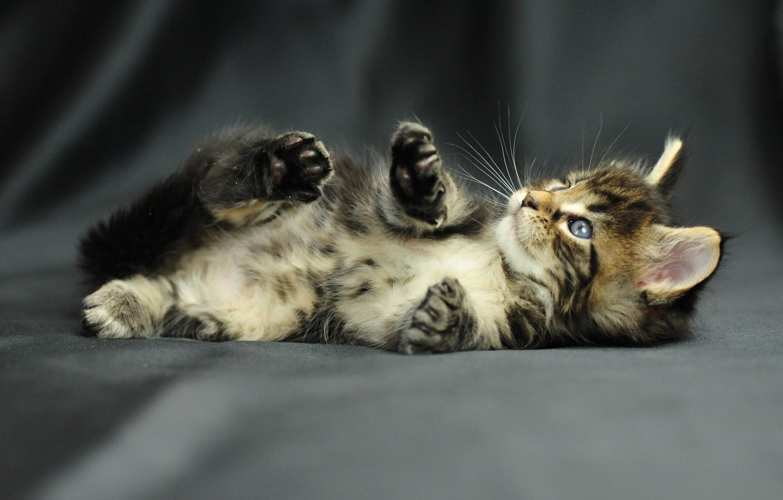 Photo wallpaper photo, baby, kitty, pussy