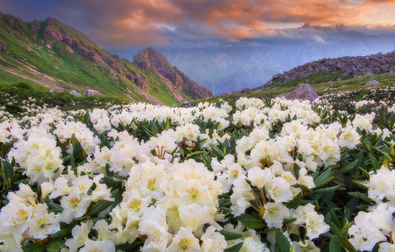 Photo wallpaper the sky, clouds, flowers, mountains, nature