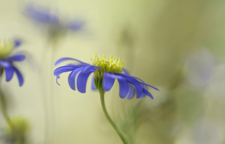 Photo wallpaper flower, background, lilac, blur