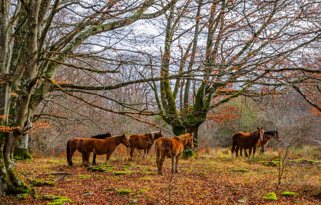 Photo wallpaper autumn, forest, leaves, trees, moss, horse