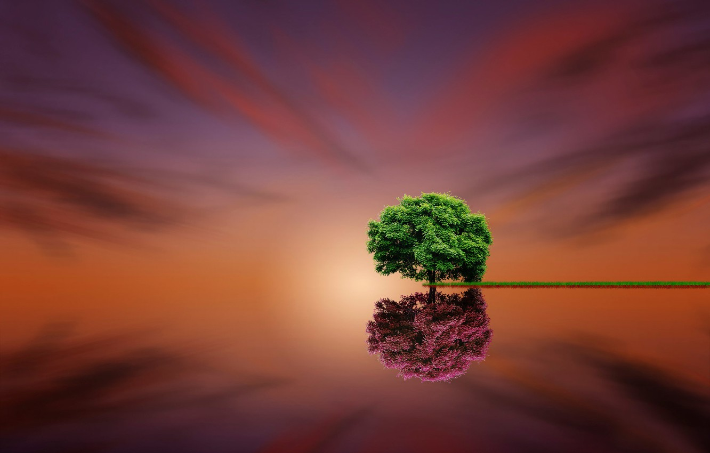 Photo wallpaper reflection, tree, fine art, Parallel Life