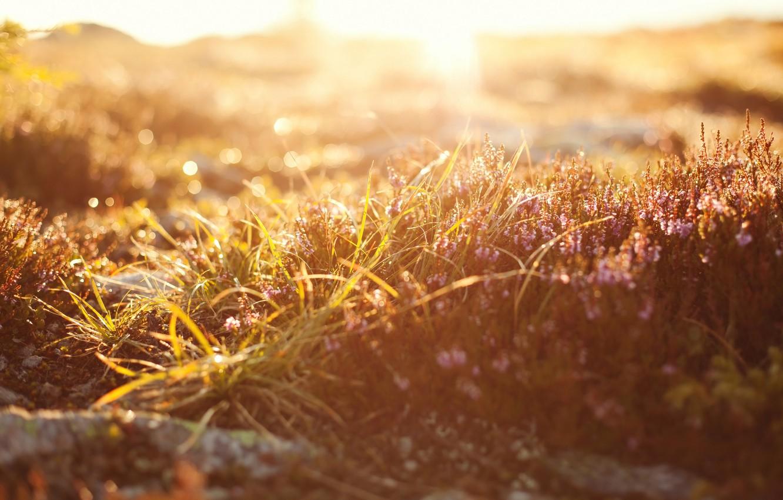 Photo wallpaper grass, macro, light, nature, light, grass, nature, macro, bokeh, bokeh, 2560x1600