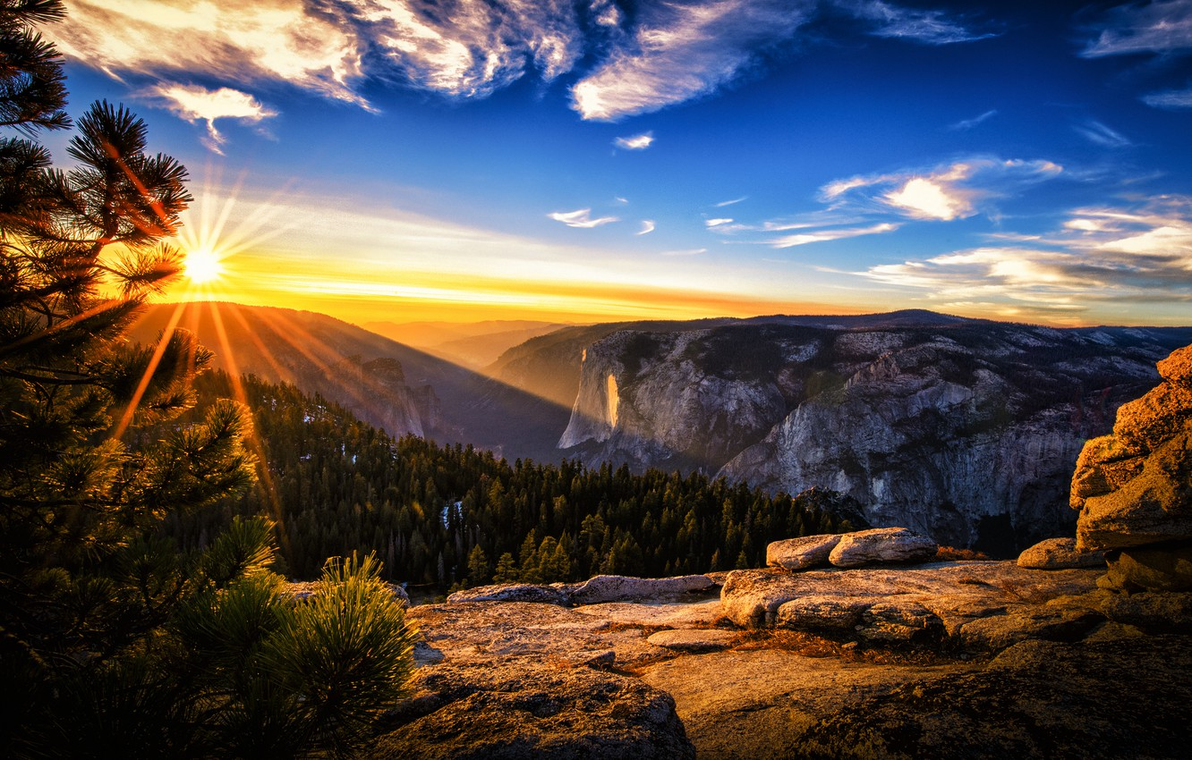 Photo wallpaper forest, the sun, rays, mountains, pine