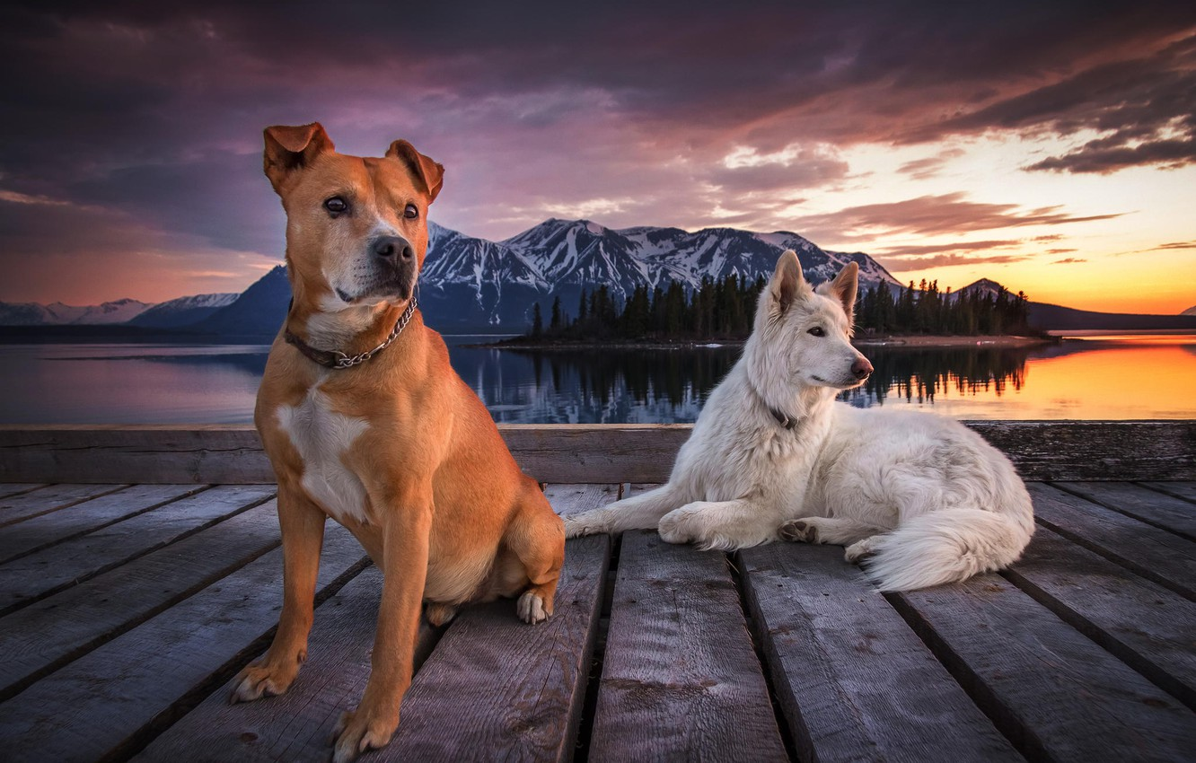 Photo wallpaper the sky, clouds, mountains, pierce, Dogs