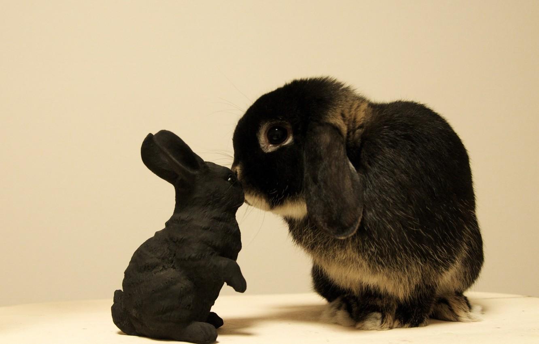 Photo wallpaper toy, rabbit, Bunny