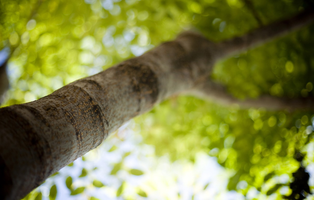 Photo wallpaper greens, summer, light, trees, freshness, branches, heat, photo, tree, mood, foliage, leaf, focus, blur, branch, ...