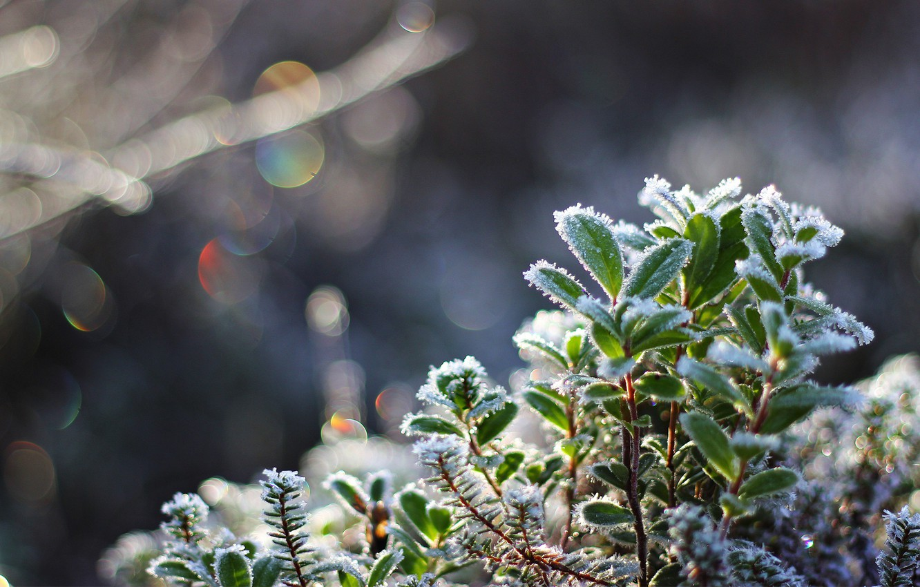 Photo wallpaper cold, frost, leaves, macro, snow, plant, crystals, bokeh