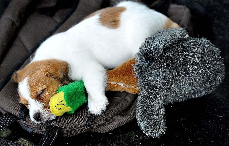 Photo wallpaper toy, dog, sleeping, puppy, duck