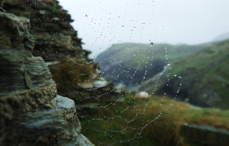 Photo wallpaper water, drops, macro, Rosa, web, network.stones
