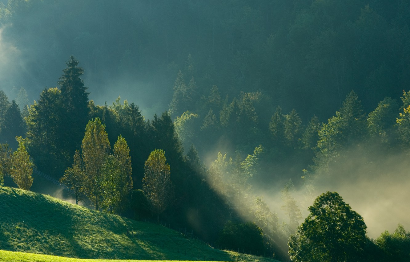 Photo wallpaper forest, mountains, nature, fog, morning