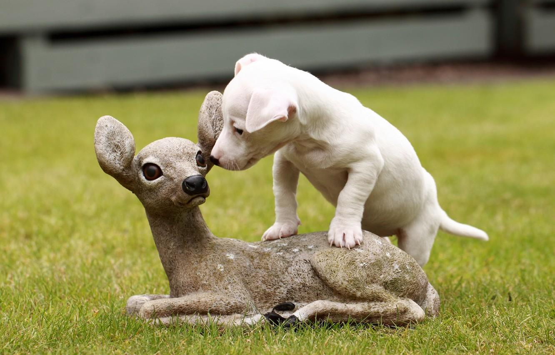 Photo wallpaper dog, puppy, sculpture, fawn, Jack Russell Terrier