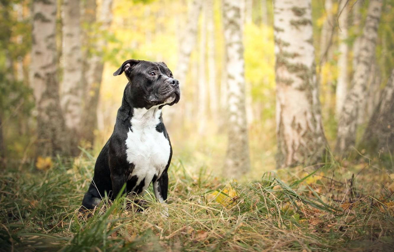 Photo wallpaper autumn, look, nature, each, dog