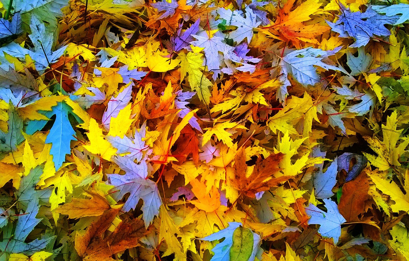 Photo wallpaper autumn, nature, Leaves, weather, Sunny