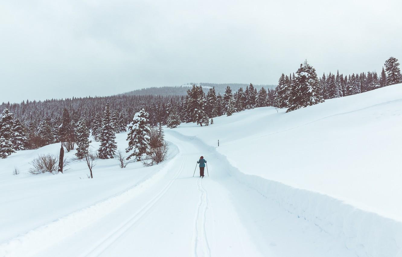 Photo wallpaper road, winter, person, ski, pine, skiing, snowing