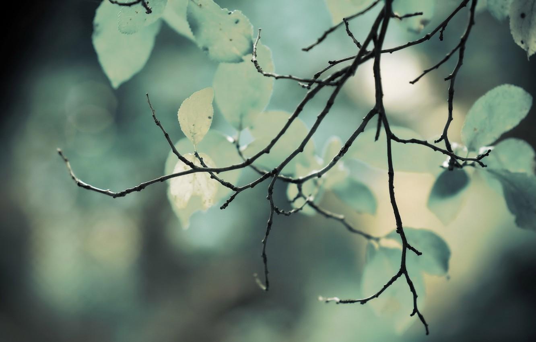 Photo wallpaper greens, foliage, branch