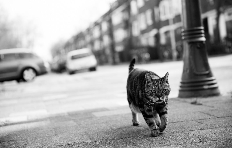 Photo wallpaper cat, look, face, Koshak