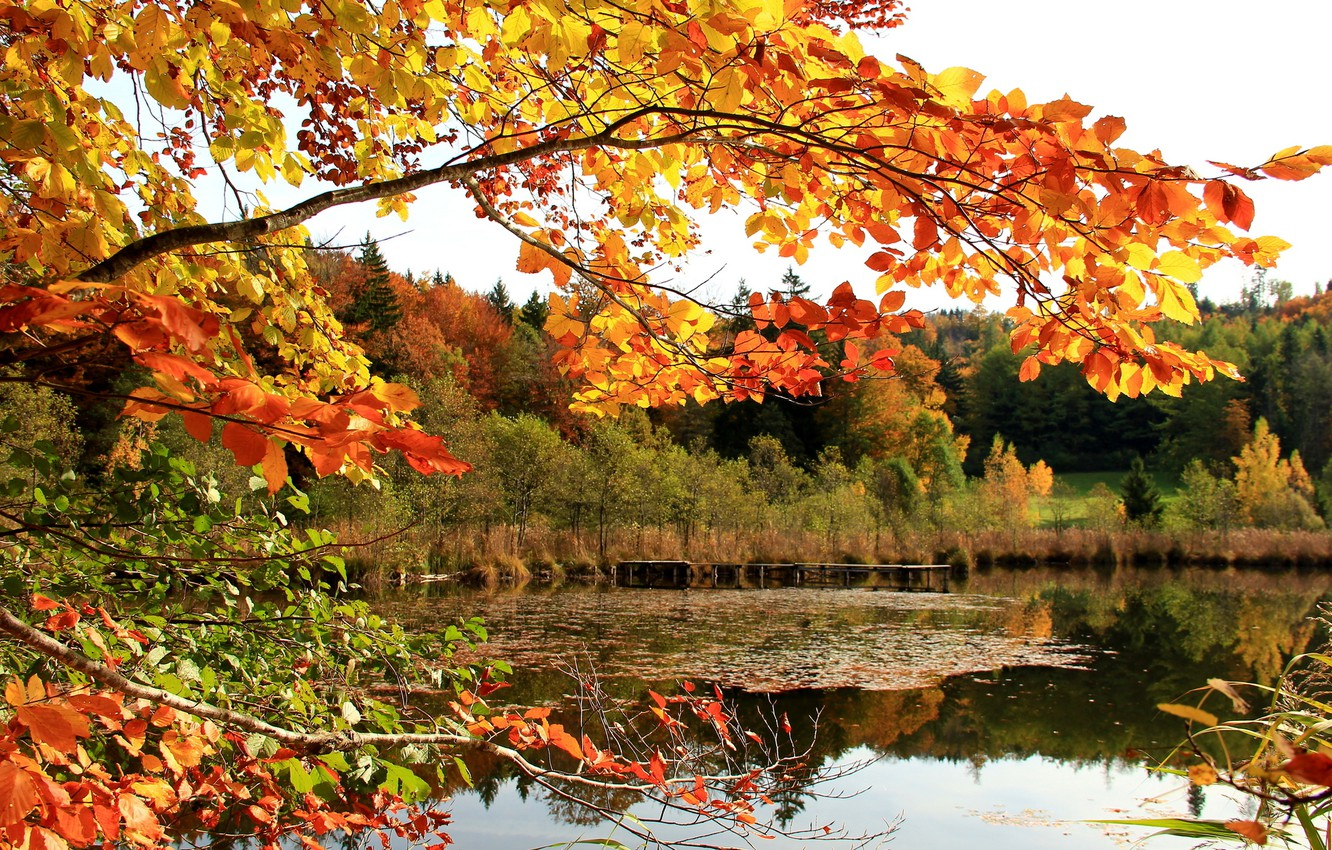 Photo wallpaper autumn, forest, the sky, leaves, lake, branch