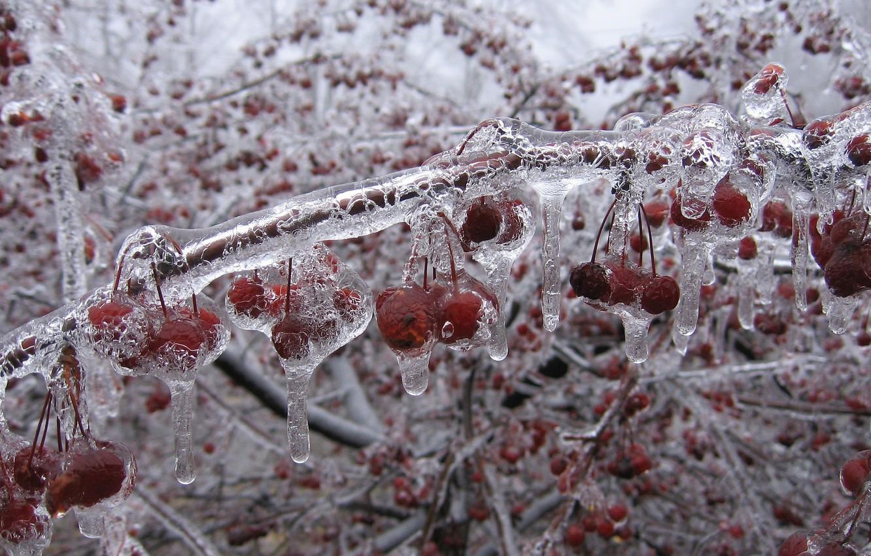 Photo wallpaper ice, winter, cherry