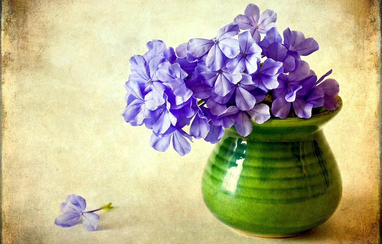Photo wallpaper flower, purple, flowers, vase, Phlox