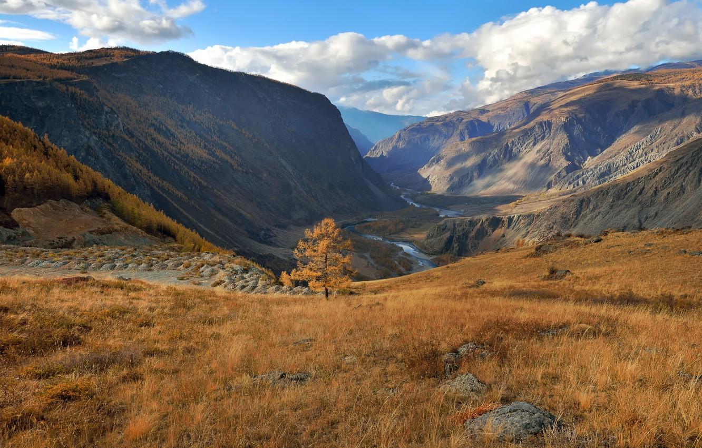 Photo wallpaper autumn, Altay, larch