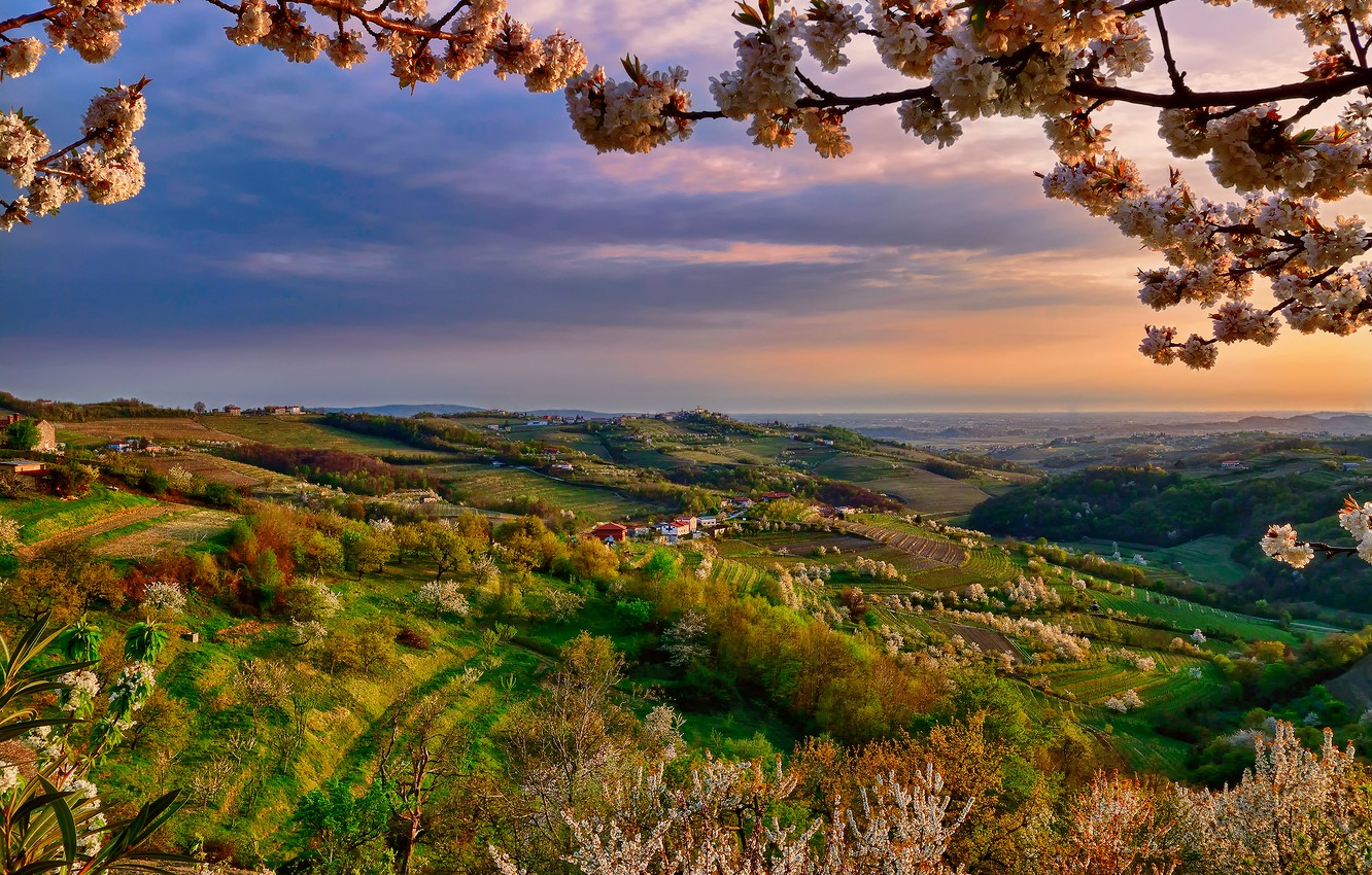 Photo wallpaper color, branch, spring, the evening, valley, Italy, April, Lombardy, Collio