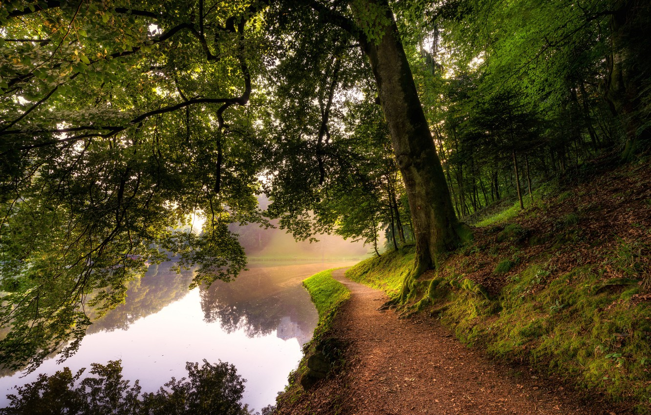 Photo wallpaper forest, trees, river, moss, trail