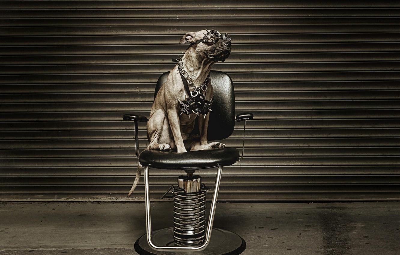 Photo wallpaper chair, glasses, Metalist