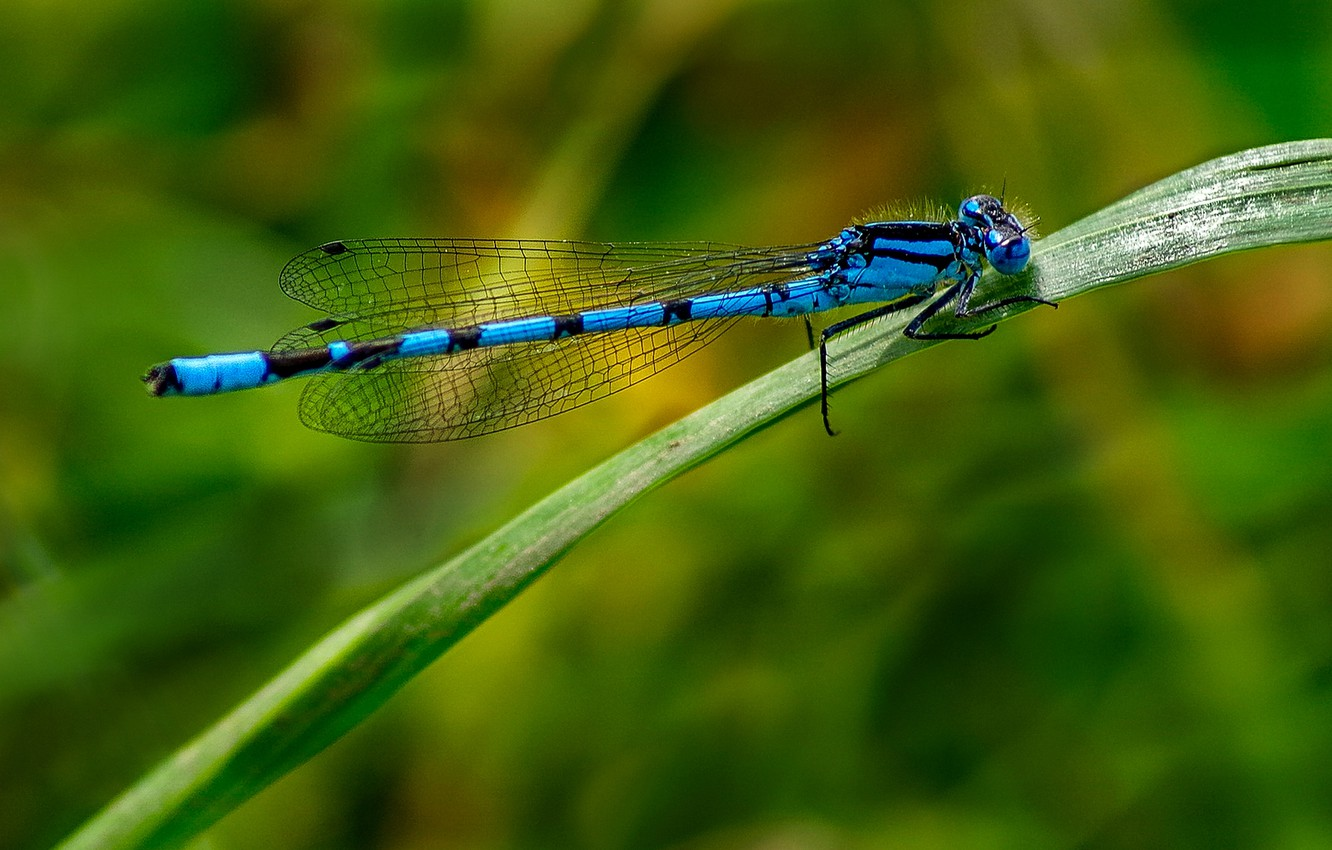 Photo wallpaper grass, nature, sheet, dragonfly, insect