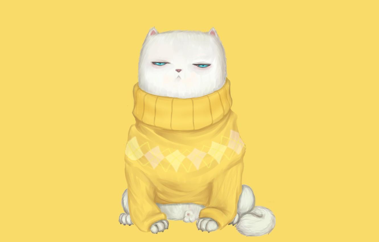 Photo wallpaper cat, look, muzzle, sweater