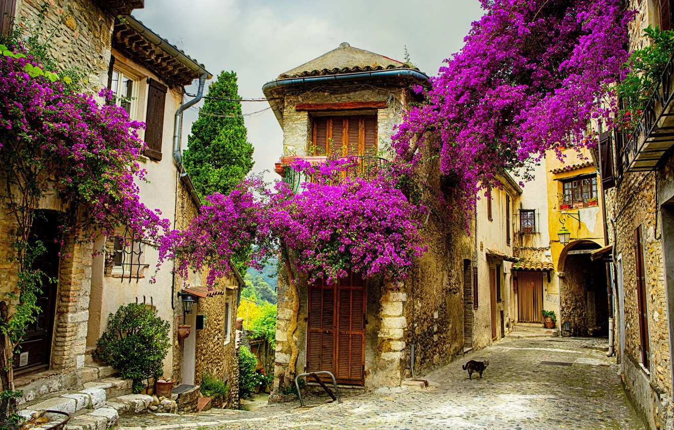 Photo wallpaper summer, flowers, the city, street, France, .Provence