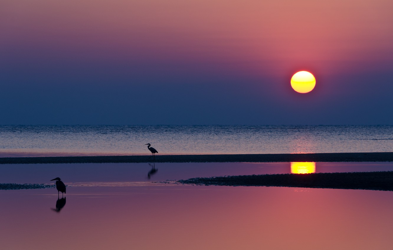 Photo wallpaper sea, the sky, water, the sun, sunset, birds, bright, reflection, The evening, blue, raspberry, herons