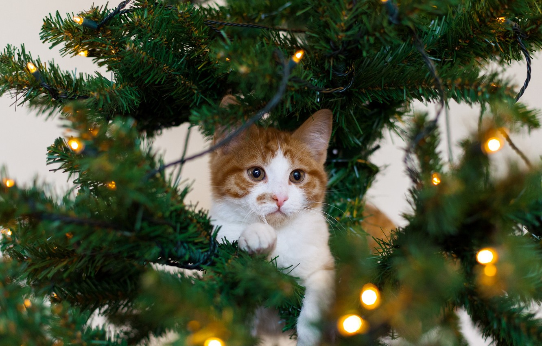 Photo wallpaper cat, white, cat, holiday, tree, red, kitty, garland