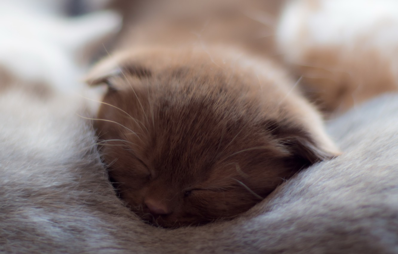 Photo wallpaper cats, comfort, house