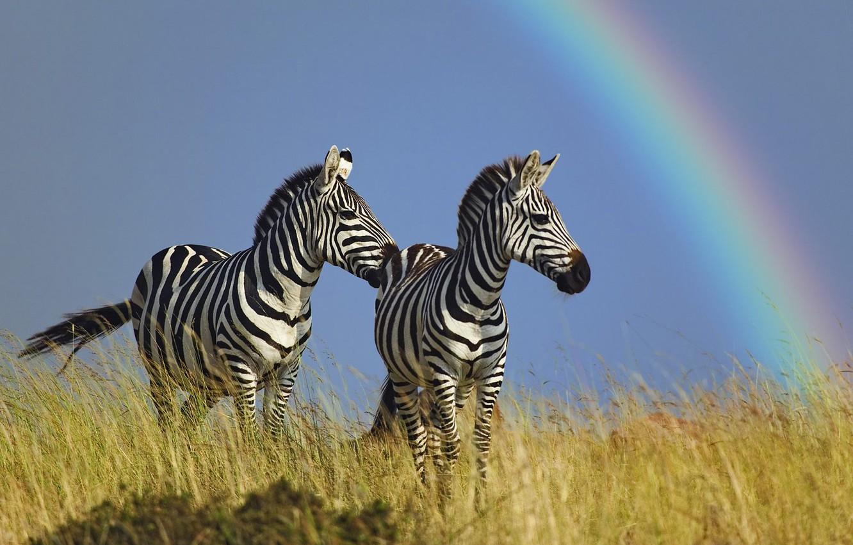 Wallpaper Horse Rainbow Zebra Images For Desktop Section