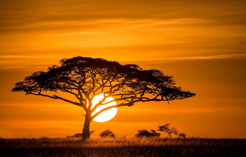 Photo wallpaper the sun, sunset, tree, Savannah