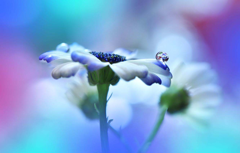 Photo wallpaper macro, drop, Flower