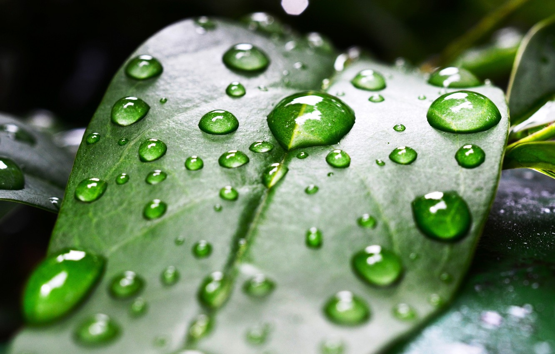 Photo wallpaper leaves, drops, macro, sheet, green, Rosa