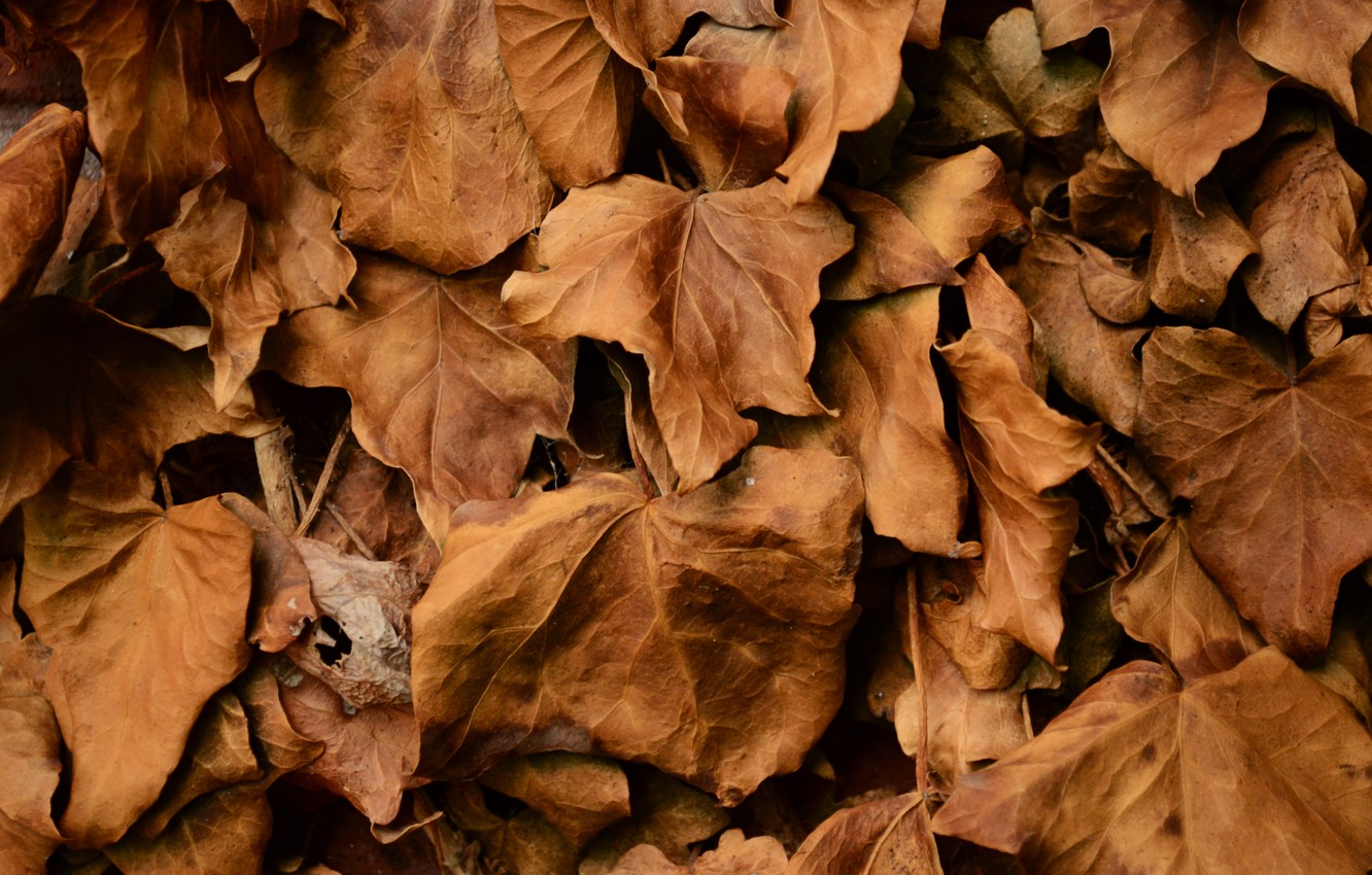 Photo wallpaper autumn, leaves, dry