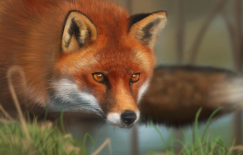 Photo wallpaper grass, face, animal, art, Fox, red