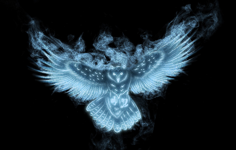 Photo wallpaper look, owl, wings, black background
