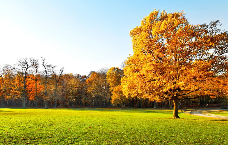 Photo wallpaper landscape, nature, garden, panorama, landscape, nature, beautiful, beautiful, scenic, green field, garden, Autumn trees, Panorama, …