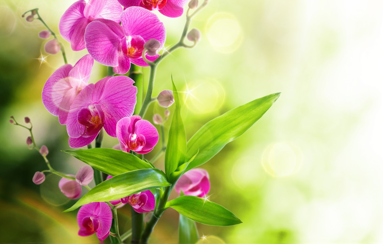 Photo wallpaper Orchid, water, flowers, orchid, reflection, bloom
