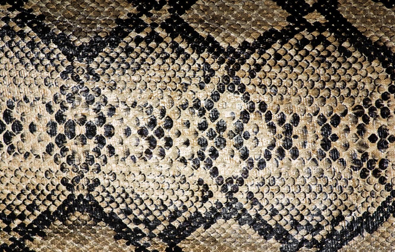 Photo wallpaper leather, color, reptile