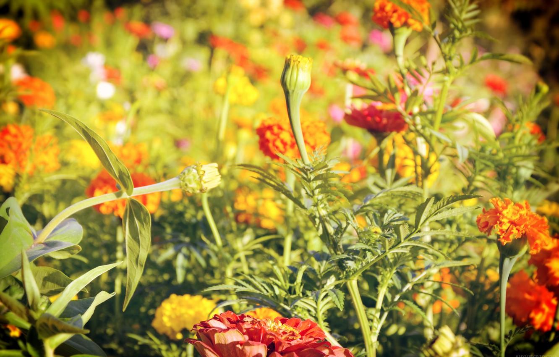 Photo wallpaper greens, summer, macro, flowers, summer, flowers, cottage