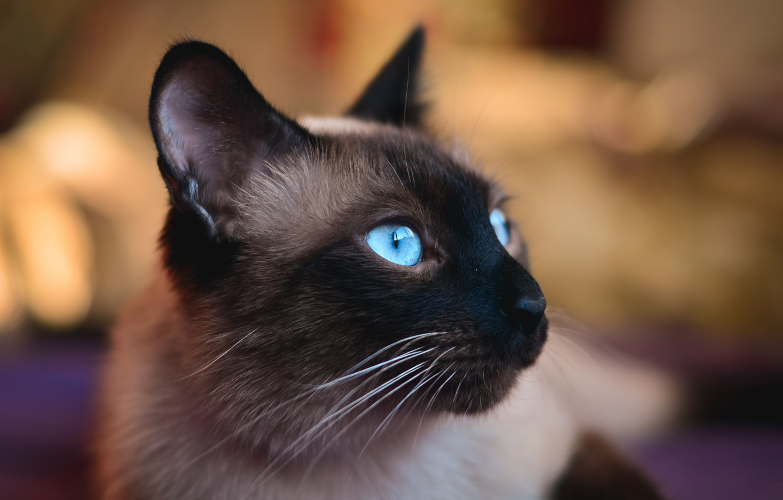 Photo wallpaper eyes, cat, blue