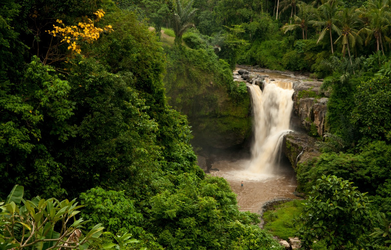 Photo wallpaper forest, rock, palm trees, waterfall, Bali, Indonesia, Tegenungan Waterfall, Indonesia, Bali
