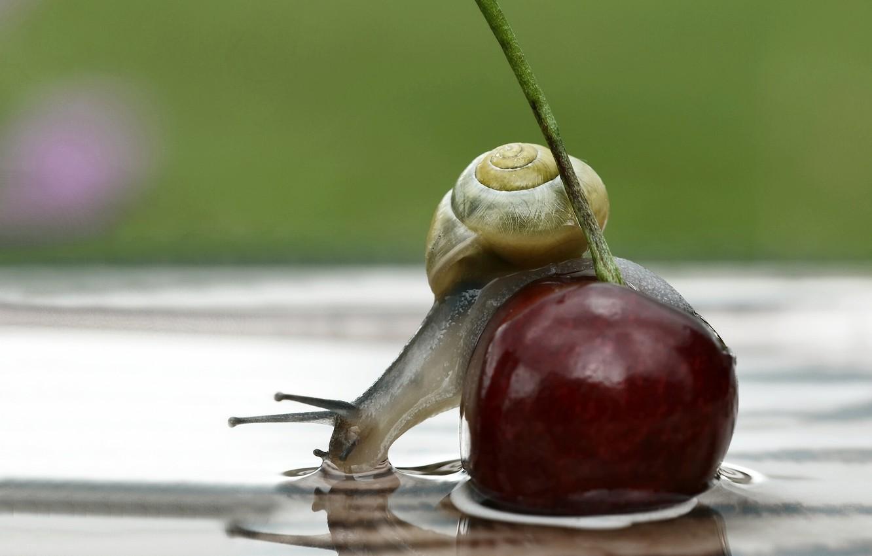 Photo wallpaper water, macro, cherry, reflection, snail, berry