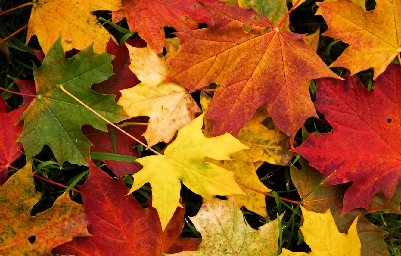 Photo wallpaper autumn, leaves, macro, maple