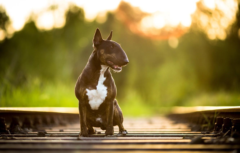 Photo wallpaper road, background, dog