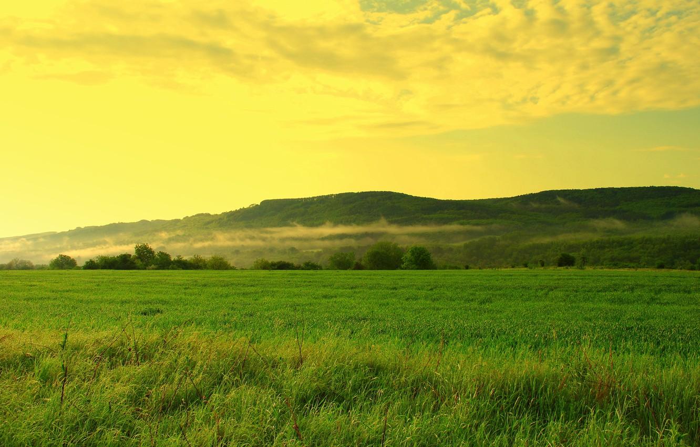 Photo wallpaper field, forest, the sky, grass, clouds, trees, hills, haze, small